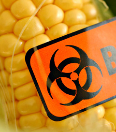 High Fructose Corn Syrup is Contaminated with Toxic Mercury