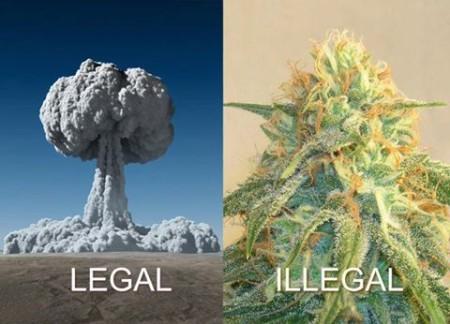 """""""Legal. Illegal."""""""