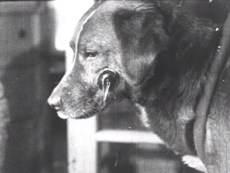 """Another still shot from """"Mechanics of the Brain."""" Like the child above, the dog in this picture has been surgically implanted with a saliva-catching device, for the purposes of behavioral experimentation"""