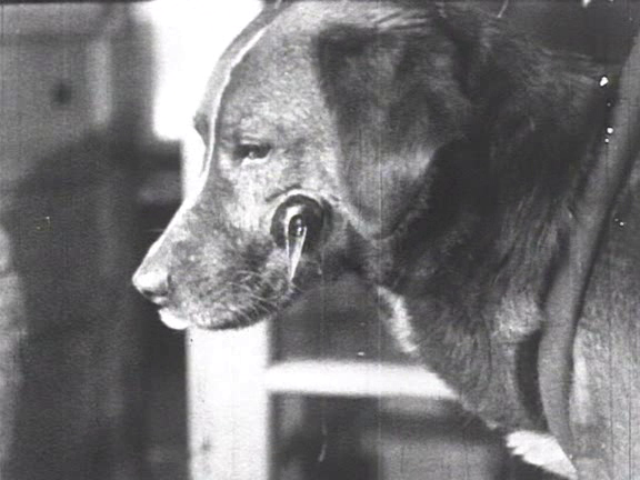 ivan pavlovs theory and experiments with dogs on conditioned behavioral responses Antecedent events and conditions are defined as those conditions occurring before the behavior pavlov's early experiments pavlov was one of the first scientists to demonstrate the relationship between environmental stimuli and behavioral responses pavlov ivan pavlov and his dogs.
