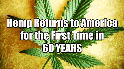 """Hemp Returns to America for the First Time in 60 YEARS"" http://www.survivalandbeyond.net/industrial-hemp-returns-to-america/"