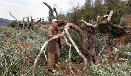 2014-01-23-discussing-israeli-settler-destruction-of-hundreds-of-recently-planted-olive-trees-in-west-bank-ramallah