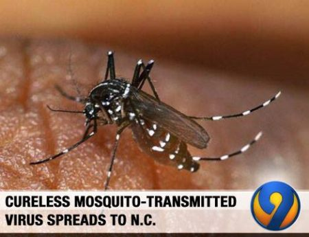 """Cureless mosquito-transmitted virus spreads to N.C."""