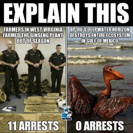 Explain This: Farmers in West Virginia farmed the ginseng plant out of season - 11 arrests; BP oil's Deepwater Horizon destroys entire ecosystem in Gulf of Mexico - 0 arrests