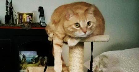 The Newhart family's cat, Sugar