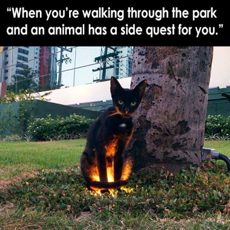 """When you're walking through the park and an animal has a side quest for you."""