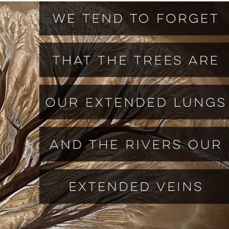 """We tend to forget that the trees are our extended lungs and the rivers our extended veins"""