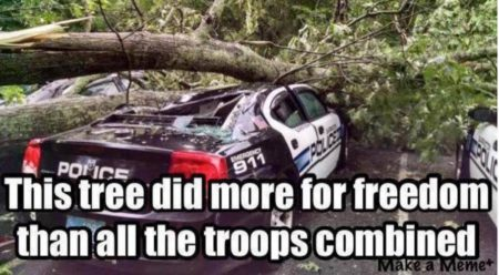 """This tree did more for freedom than all of the troops combined"""