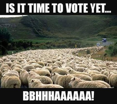"""Is it time to vote yet... Bbhhhaaaaaa!"""