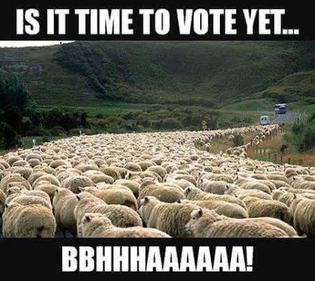 """""""Is it time to vote yet... Bbhhhaaaaaa!"""""""