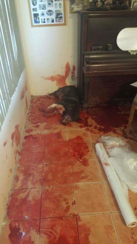 "Buddy the 11 year old Husky lost his life to the use of lethal force by Police, they went to the wrong house!!! http://goo.gl/nfOJJh This shooting happened on 6-6-16 in Hesperia, California. These are the pictures that should be on the news! (Photo originally shared here, on the Facebook page, ""Government is Bad"")"